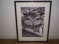 pen and ink owl