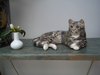 Winstanley Pottery Cat